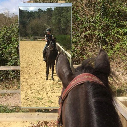 Arena Mirror 4mm Set Of 5 Mirrors For Training